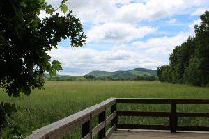 garden landscape view