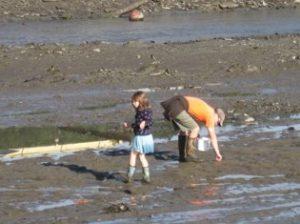 rescuing sea lamprey larvae
