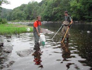 lamprey river research